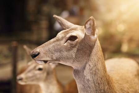 Picture of wild animals on Nature Exhibition