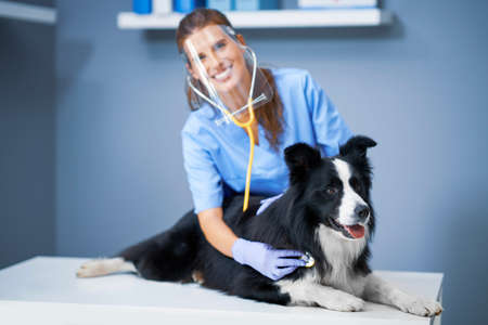 Female vet examining a dog in clinic Фото со стока