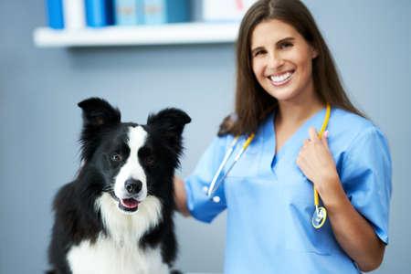 Female vet examining a dog in clinic Foto de archivo