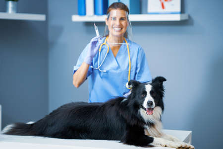 Female vet vaccinating a dog in clinic