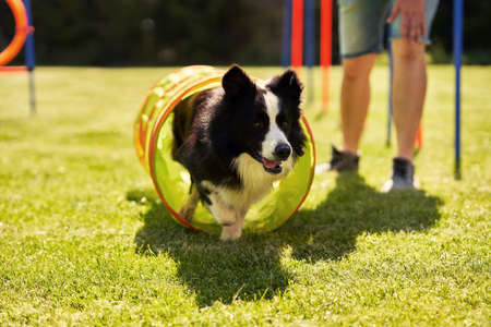 Border collie dog and a woman on an agility field Фото со стока