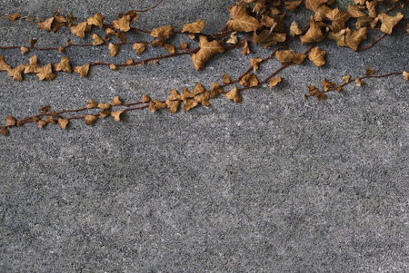 grown: Horizontal front view of brown leaves grown on the top side of a concrete wall