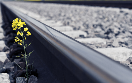 near death: Horizontal perspective view of a yellow flower growing near a railroad track