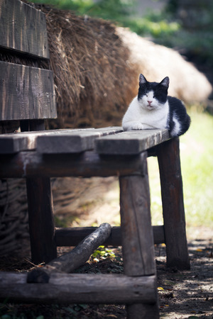 quite time: vertical photo of a black and white cat sitting and sleeping on a wooden rural bench near a fence Stock Photo