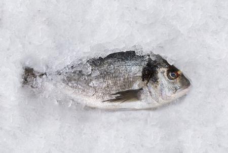 dorada: Horizontal top view of a dorada fish on an ice table at the market