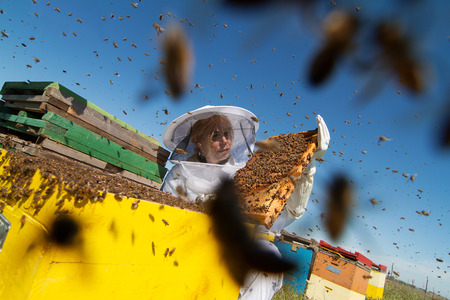 Horizontal photo of a beekeeper in white protection suit watching over his bee hives on a green field