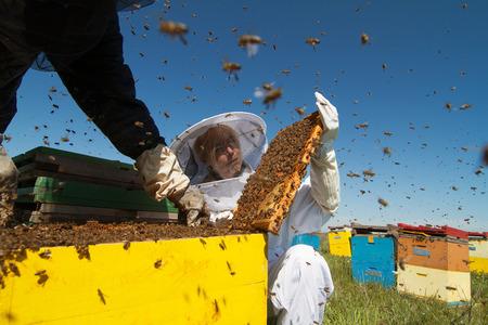 すぐ横を白い保護で養蜂家のスーツ緑のフィールドに彼のミツバチの巣箱を見守って
