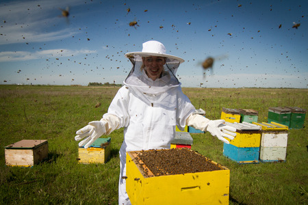 Horizontal photo of a beekeeper in white protection suit standing behind a beehive with arms wide open Stock Photo