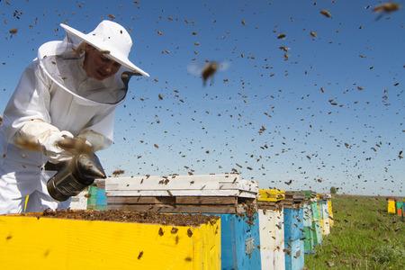 Horizontal Vorderansicht eines Imkers Rauchen der Wabe aus einem Bienenstock mit Bienen um sie herum wimmelt