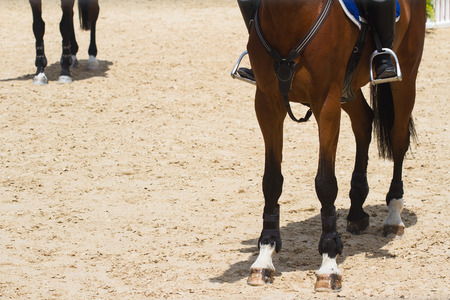 front view closeup of brown race horse hoof on brown training ground and jockey astride on top