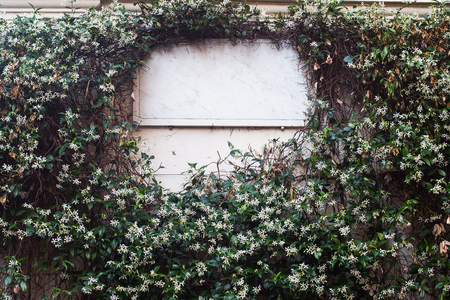 front view closeup of white rectangular blank marble signboard on white building wall covered in leaves and white flowers