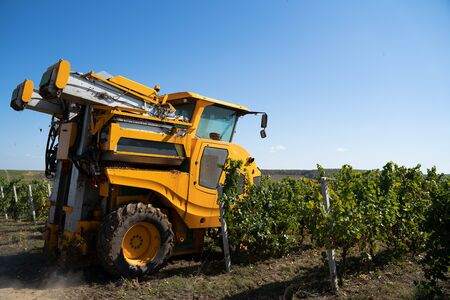 closeup of yellow agricultural grape harvesting machine entering the vineyard rows for production processing Stock Photo
