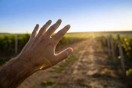 point of view perspective of Caucasian man holding a hand against the morning sun on a country road between rows of vineyard
