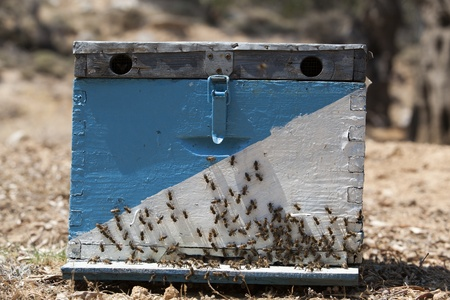 beekeeper: beehive Stock Photo