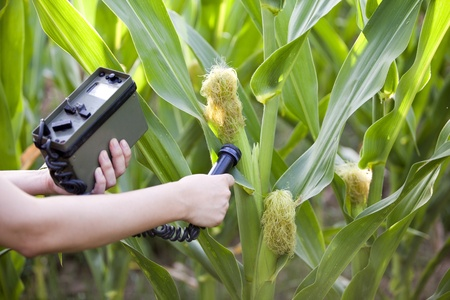 detecting: measuring radiation levels of maize