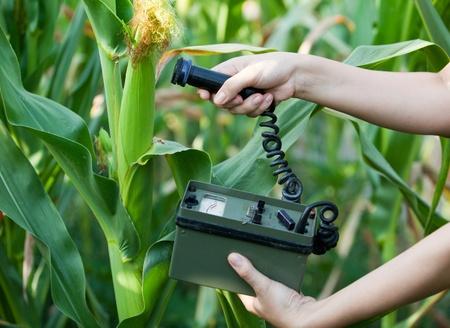 contamination: measuring radiation levels of maize