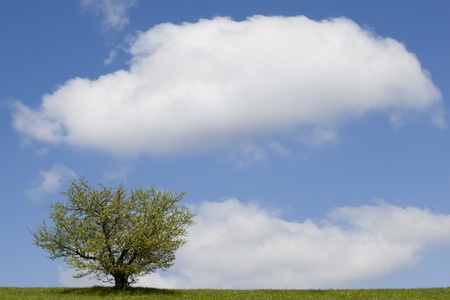 lonely tree on a green field against blue sky photo