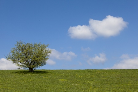 tree, green field and the blue sky with white clouds photo