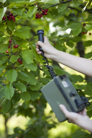 measuring radiation levels of fruits  photo