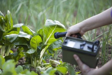monitoreo: la medición de los niveles de radiación de verduras