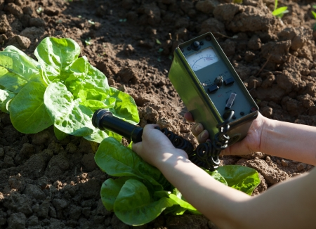 food research: measuring radiation levels of vegetables