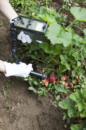 emissions: measuring radiation levels of strawberries