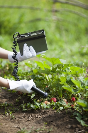 detecting: measuring radiation levels of strawberries