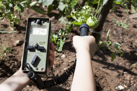 detecting: measuring radiation levels of vegetable