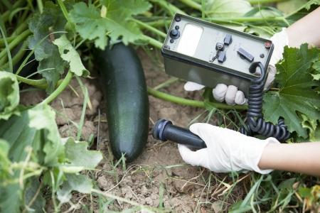 detecting: measuring radiation levels of vegetable