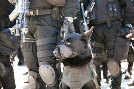 Polizeihund Standard-Bild