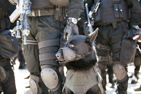 rendőrségi kutya Stock fotó