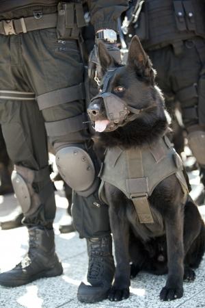 perro policia: perro polic?a Foto de archivo