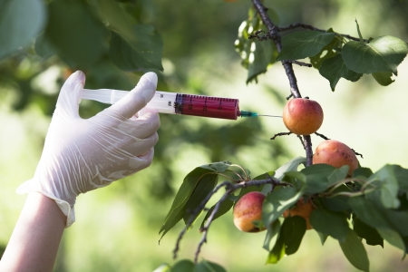 safety gloves: non-organic fruit Stock Photo