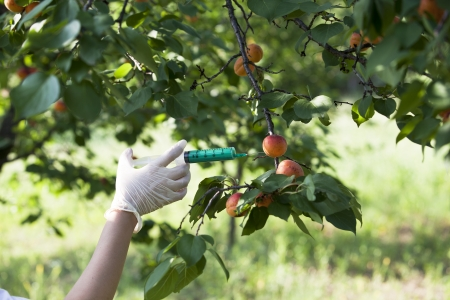 genetically modified: pesticide injected in a fruit Stock Photo