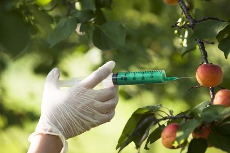 genetisch veränderte Frucht