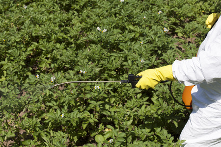 pesticides: Vegetables spraying with pesticides in a garden Stock Photo