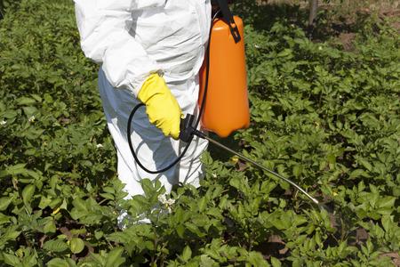 野菜な庭で殺虫剤を噴霧 写真素材 - 29724610