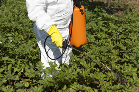 Vegetables spraying with pesticides in a garden Stock Photo