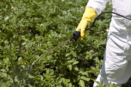 non cultivated: Vegetables spraying with pesticides in a garden Stock Photo