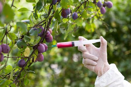 genetically modified organisms: Genetically modified food. Genetic engineering.