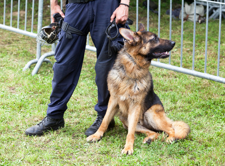 police dog: Police officer with the german shepherd police dog