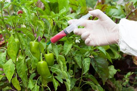 genetically modified: Genetically modified food Stock Photo