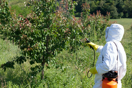spraying: Pesticide spraying