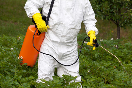 toxic substance: Pesticide spraying. Non-organic vegetables. Stock Photo