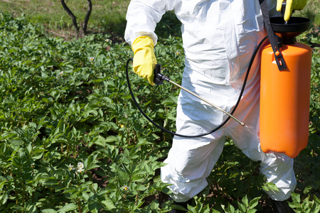 toxic: Man spraying toxic pesticides or insecticides in vegetable garde