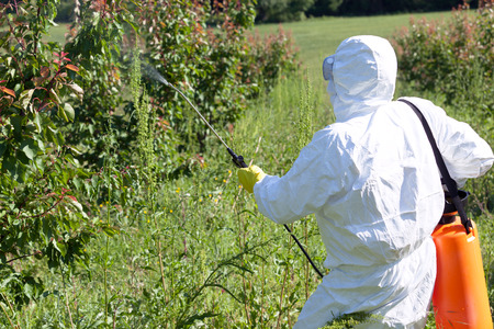 Farmer spraying toxic pesticides or insecticides in fruit orchard Stock Photo