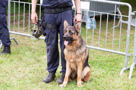 canine: Police dog. Policeman with a german shepherd on duty.