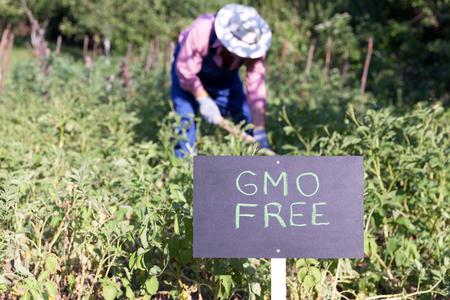 Farmer working in the non-GMO vegetable garden