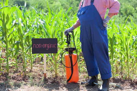 non: Non-organic maize field