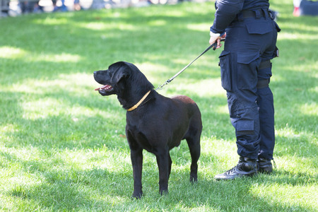 Police officer with black labrador retriever dog on duty Banco de Imagens